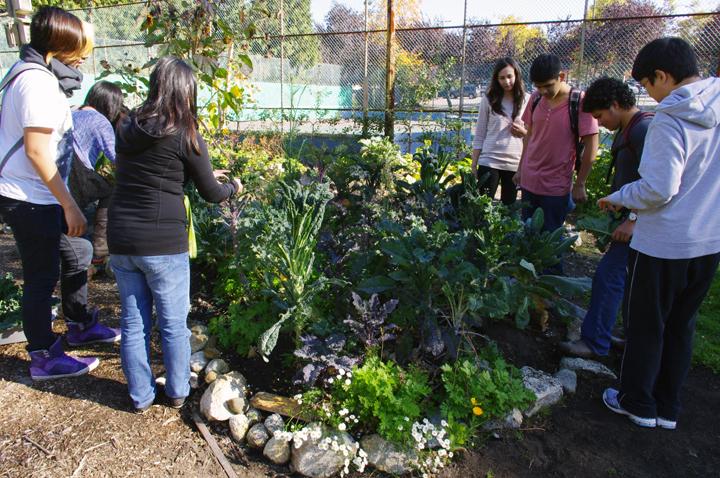garden club - oct, 2013 - 1