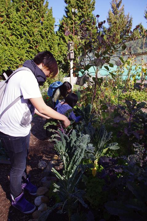garden club - oct, 2013 - 3